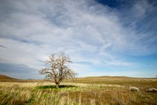Free The Last Of The Trees Stock Photos - 18845503