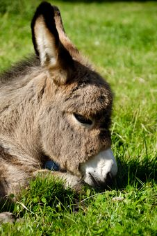 Free Donkey Face Royalty Free Stock Photos - 18846208
