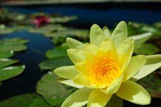 Free Lotus Flower Stock Photos - 18846213