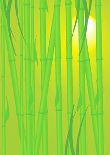 Free Bamboo Stock Photo - 18846910