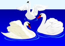 Free Swans On The Pond Royalty Free Stock Image - 18847036