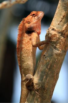 Free Gecko On A Tree Stock Images - 18847734