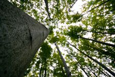 Free Green Forest Royalty Free Stock Images - 18851149