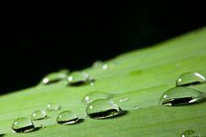 Free Dew On Banana Leaf Stock Image - 18852091