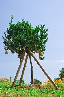 Free Orange Garden Royalty Free Stock Photos - 18852498