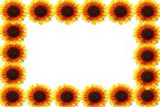 Free Sunflower Stock Photo - 18852710