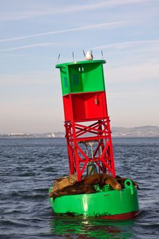 Free Sea Lions On A Buoy Stock Photo - 18852900