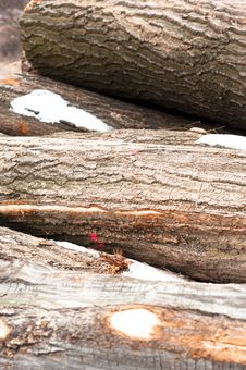 Free Logs Of Wood Piled Up Stock Photography - 18853492