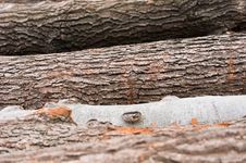 Free Logs Of Wood Piled Up Stock Photo - 18853500