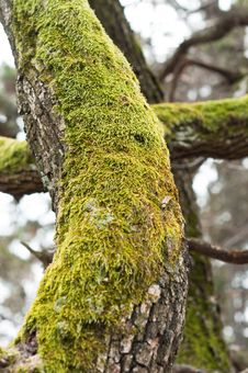 Free Bright Green Moss Royalty Free Stock Image - 18853516