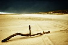 Free Branch On Sand Royalty Free Stock Images - 18855039