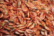 Free Shrimps Royalty Free Stock Image - 18856126