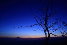 Free Tree Silhouette Stock Image - 18857121