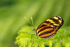 Free Butterfly Stock Photos - 18858093