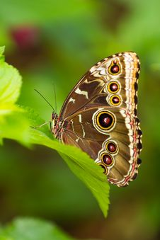 Free Butterfly Royalty Free Stock Images - 18858099