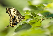 Free Butterfly Stock Photography - 18858102