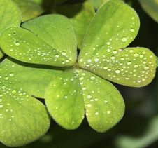 Free Clover Stock Photography - 18859152