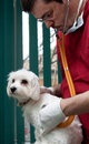 Free Vet Examining A Cute Dog Stock Photography - 18860572