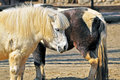 Free Brown And White Pony Stock Photography - 18869452