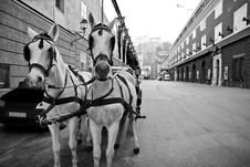 Free Riding Horses In City Center Of Salzburg, Austria Stock Photography - 18861432
