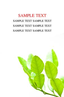Free Leaf Stock Images - 18861624