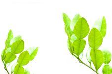 Free Leaf Stock Images - 18861644