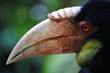 Free Hornbill Profile Royalty Free Stock Images - 18861929