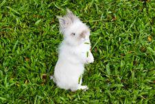 Free Rabbit Royalty Free Stock Photos - 18862998