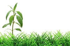 Free Tree On Grass Stock Image - 18863431