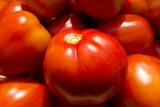 Free Ripe Tomato Stock Photo - 18863870