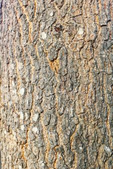 Free Bark Of Tree Stock Images - 18864664