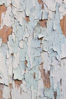 Free Termite Damaged Wood Royalty Free Stock Image - 18864796