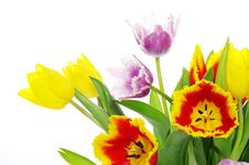 Free Tulips Royalty Free Stock Photo - 18865605