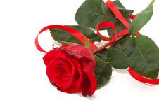 Red Roses And Flight Stock Image