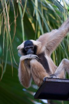 Free A Monkey Sits At The Top Of Stares Stock Photography - 18867152
