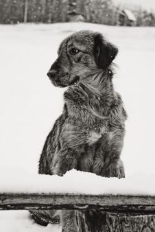 Free Dog Stock Images - 18868324