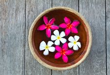 Free Colorful Plumeria Flower Stock Images - 18868654