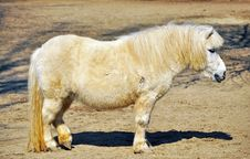 Free White Pony Stock Photo - 18869500