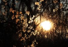 Free The Sun In The Tree Royalty Free Stock Photo - 18875215