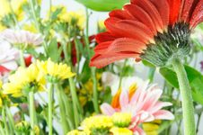 Gerberas Flowers  Background Stock Photos