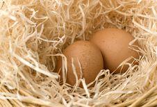 Free Comfort Nest Stock Photography - 18876212