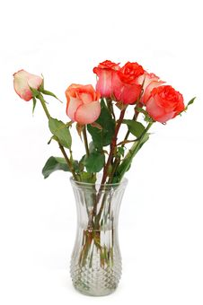 Free A Rose Glass Stock Image - 18876551