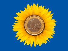 Free Sunflower-coins Royalty Free Stock Image - 18876586