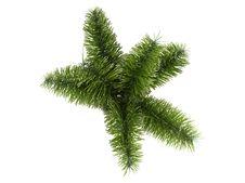 Free Foxtail Palm (Wodyetia Bifurcata) Stock Photography - 18878302
