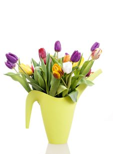 Free Easter Tulips Stock Photo - 18878390