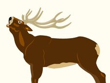 Free Wild Deer With Horn Royalty Free Stock Photo - 18879805