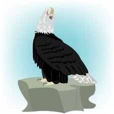 Free Bird Eagle On Stone Stock Photos - 18879823