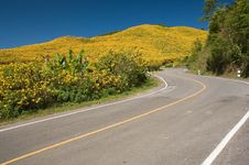 Free The Road To Yellow Flower Mountain Royalty Free Stock Images - 18879929