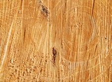 Free Cutting Tree Textures Stock Photography - 18879962