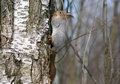Free Squirrel Eating Nut Stock Photo - 18883560
